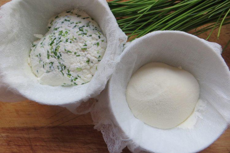 Domácí čerstvý sýr z mléka a podmáslí